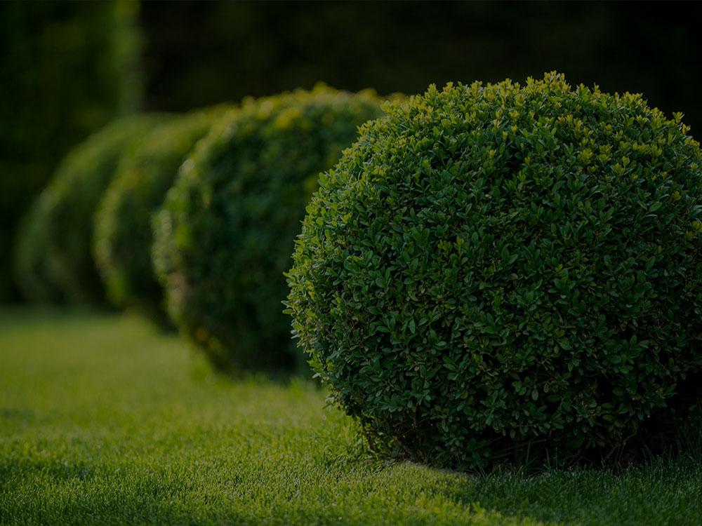 Stratmoor Landscaping