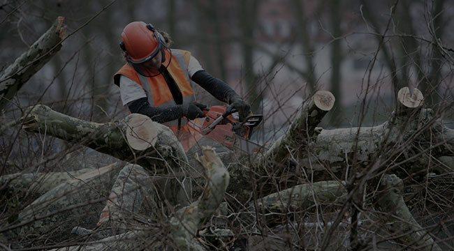 Stratmoor Tree Service